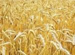 Падение индекса цен на агропродукцию