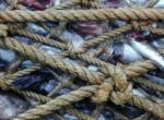 Северяне лишатся каких-либо льгот на промышленный вылов рыбы
