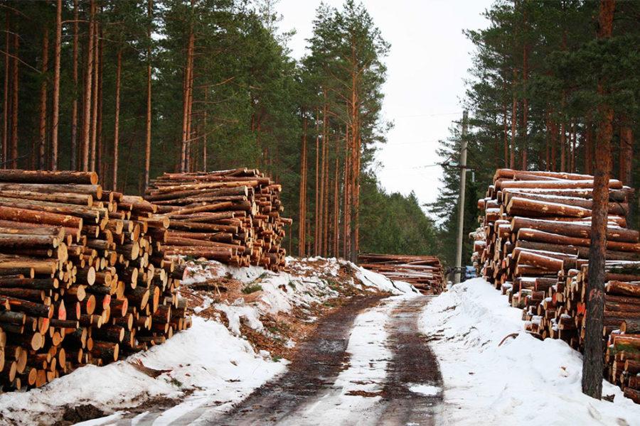 Продажа бизнеса лес самые свежие вакансии от 15 тысяч в москве